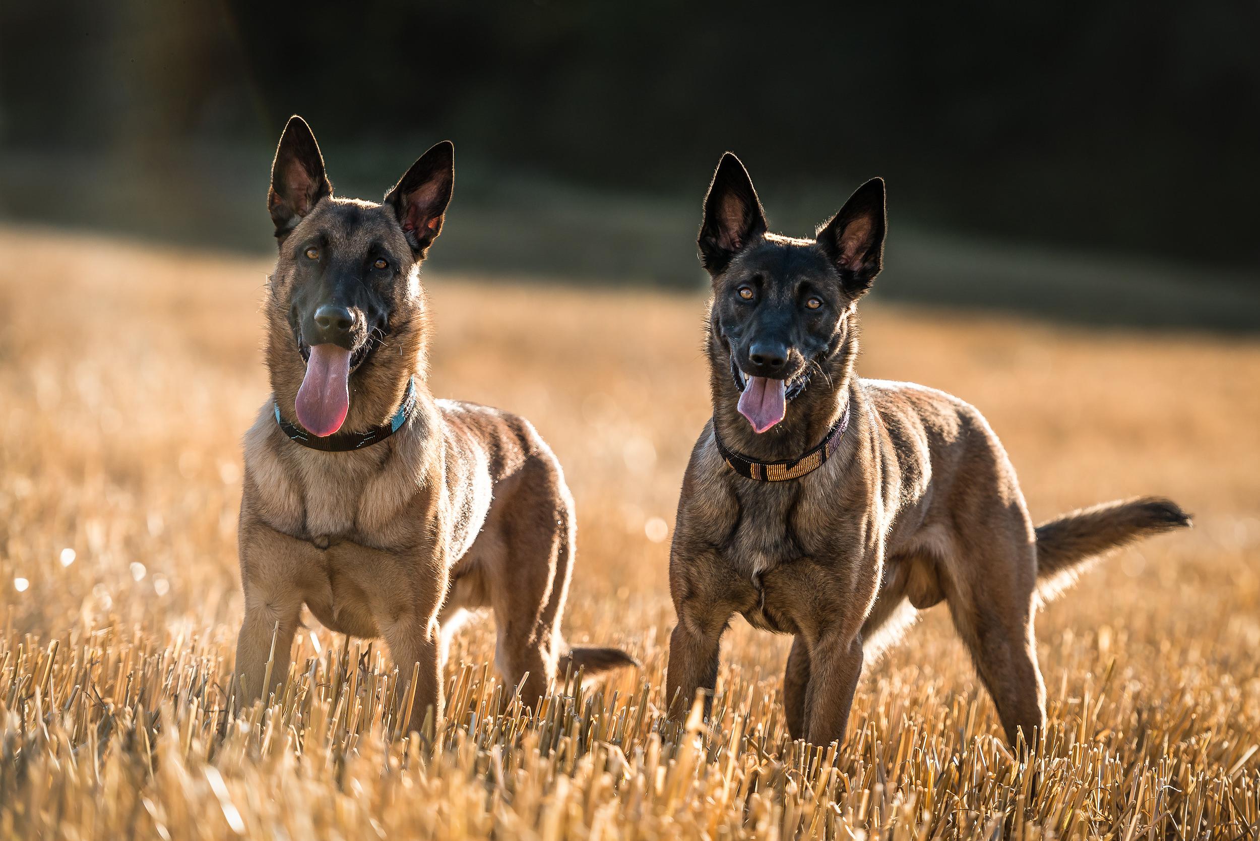 Hundfoto