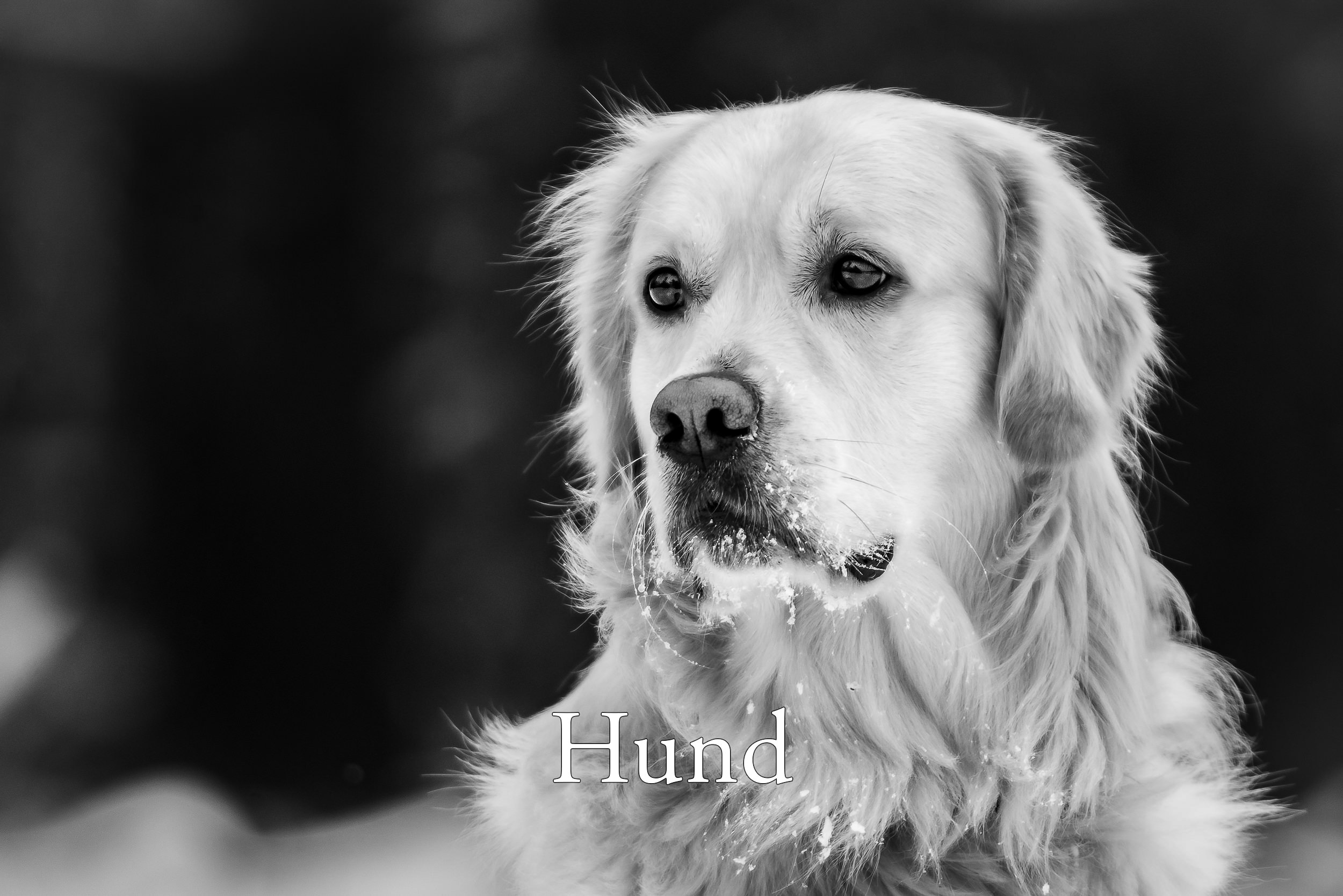 Alvenmod Foto Hundfoto