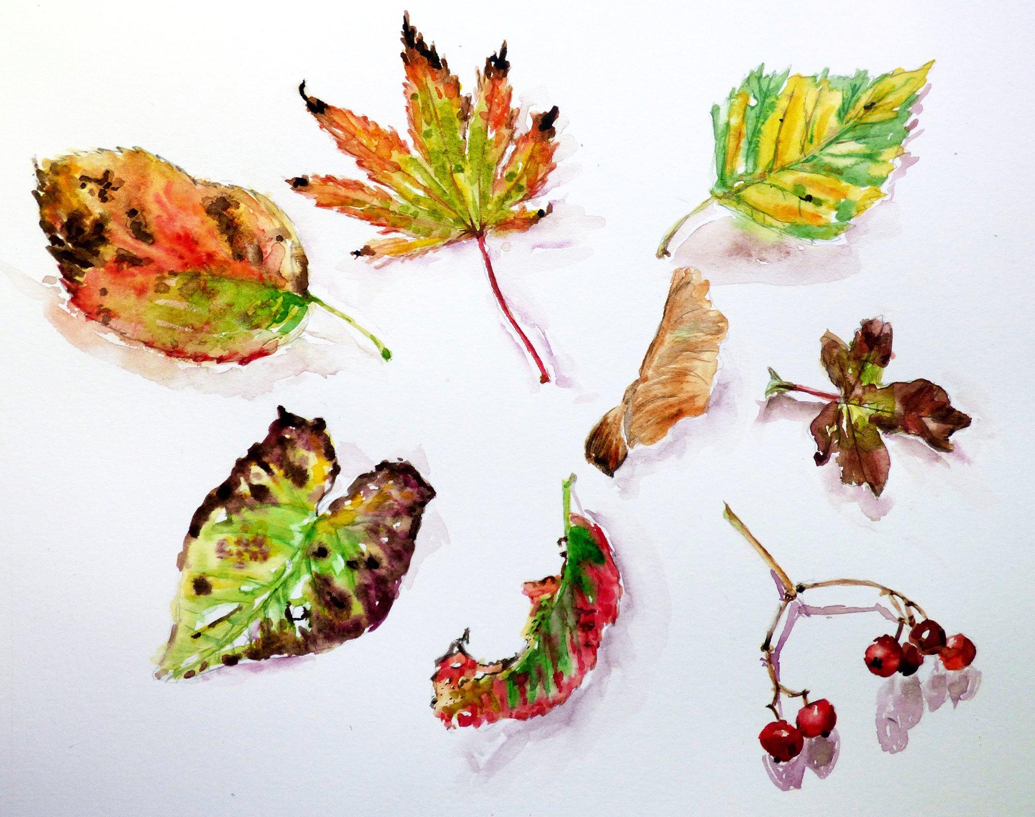 """Autumn Tints"" by Jane Vellender"