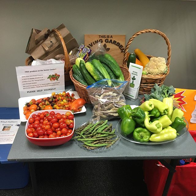 Our first delivery of the season to the White Bear Senior Program! The produce that contributed to this harvest was from several of our Giving Gardeners in the community, the Giving Gardens located at St John in the Wilderness Episcopal, White Bear Lake United Methodist Church @wblumc, and River of Life Church. This specific initiative donates fresh produce to our neighbors at the White Bear Senior Program!!