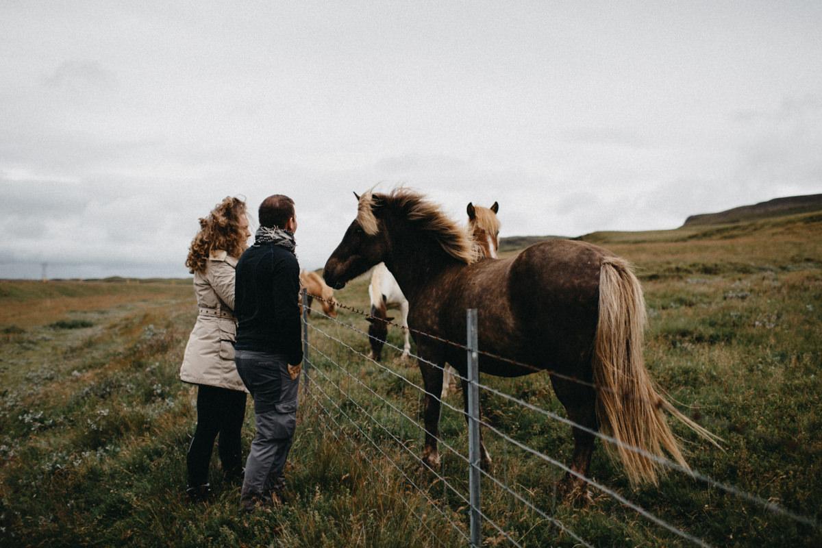 cuddling a horse