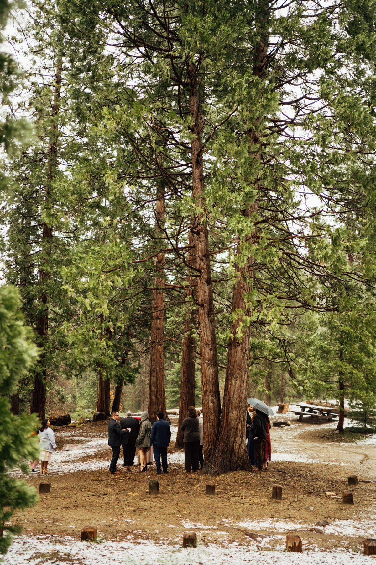 sequoia national park elopement-096.jpg
