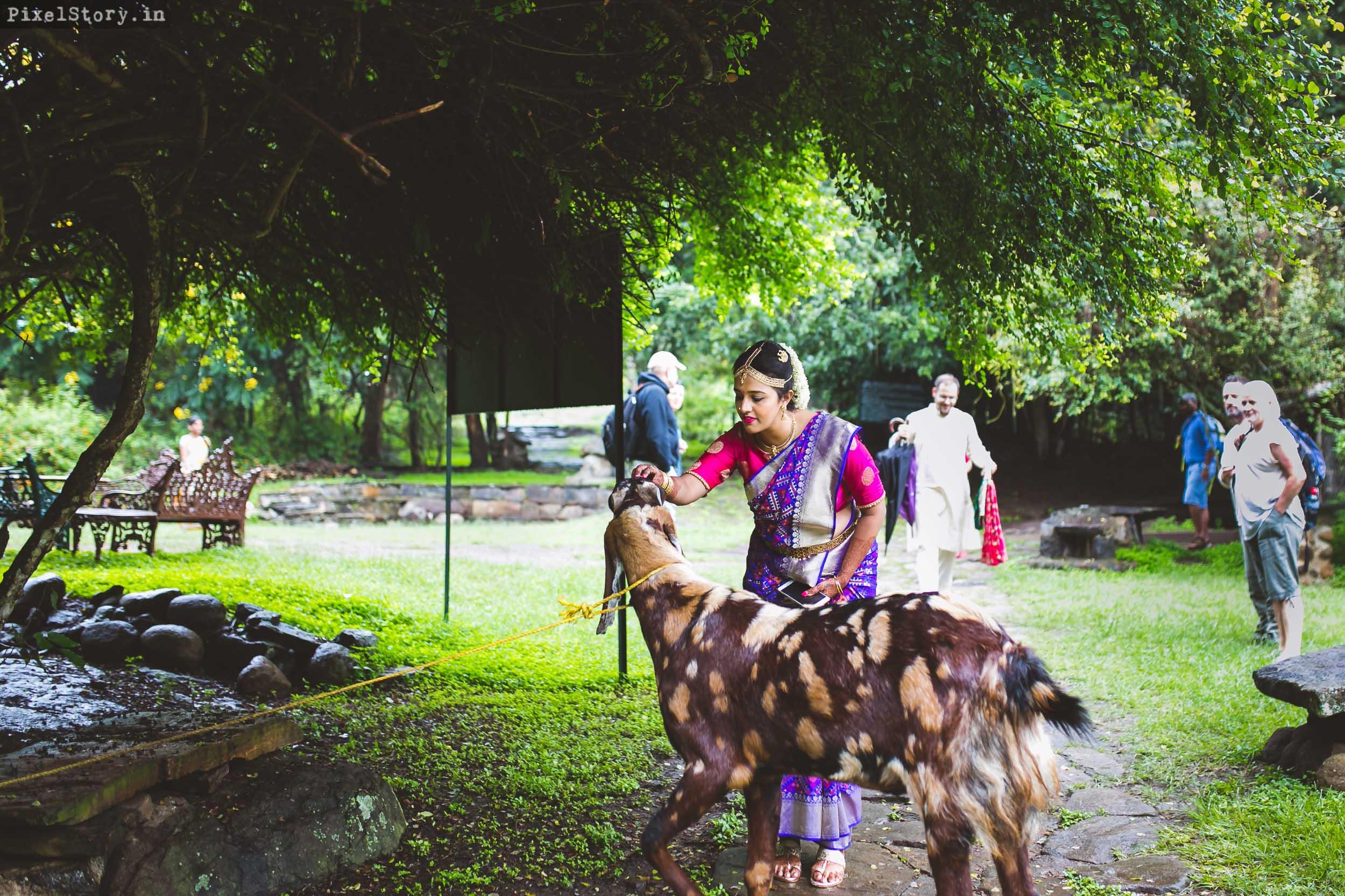 PixelStory-Jungle-Wedding-Photographer-Masinagudi-Indo-French018.jpg