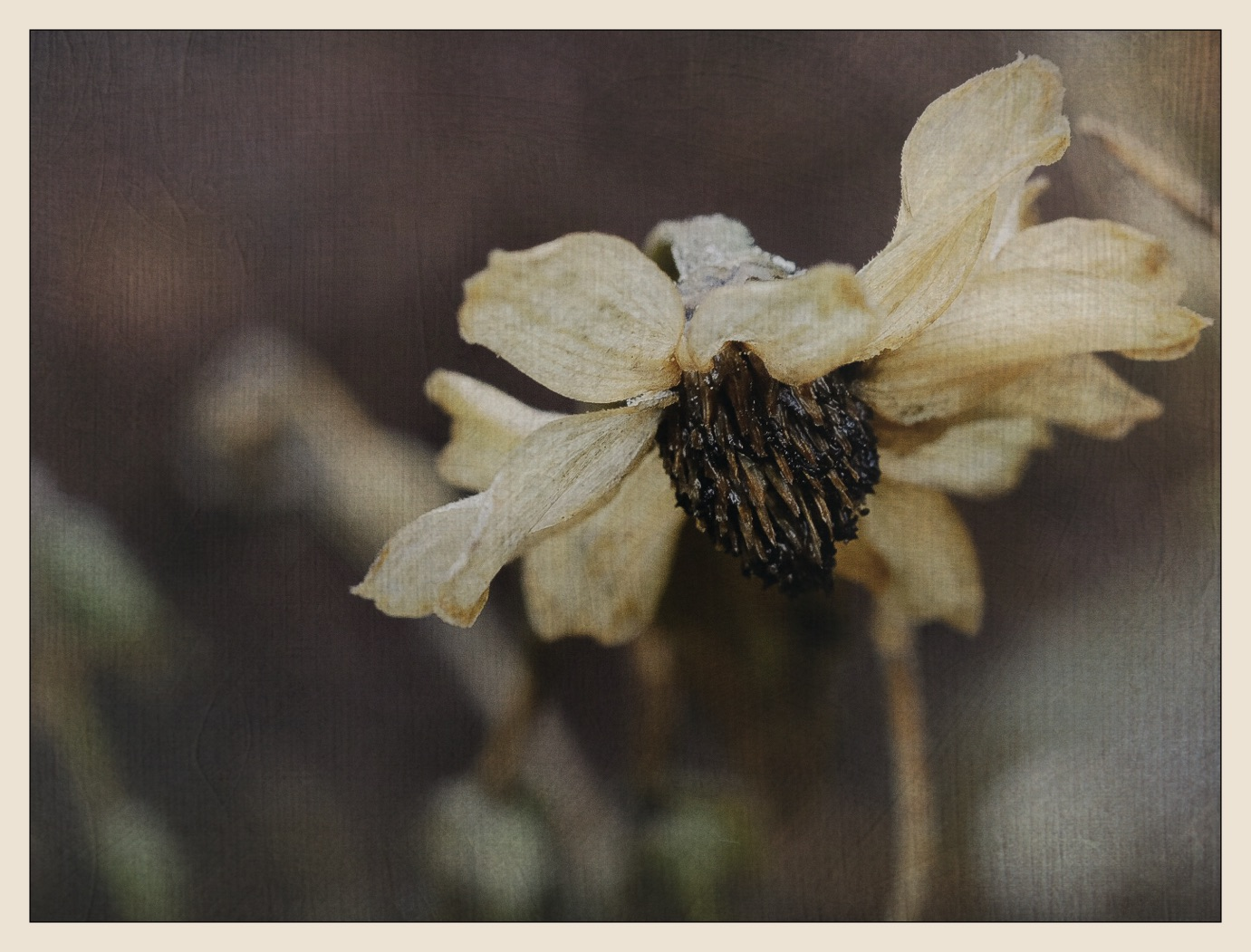 A flower which weathered the winter.