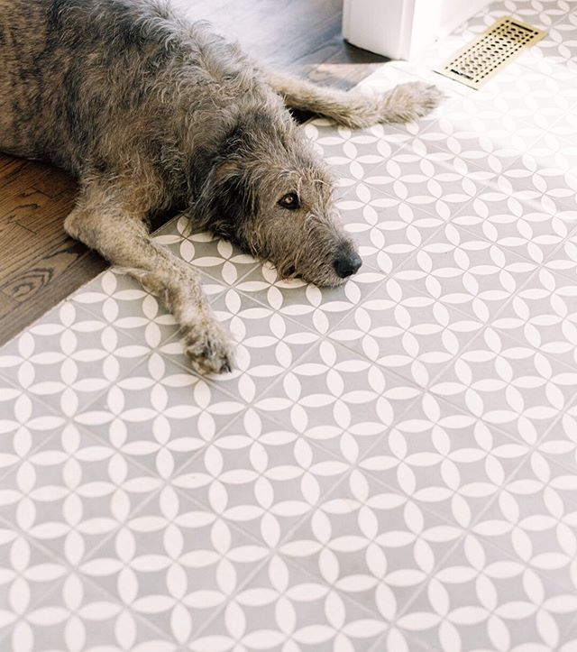You'll find this wolf indoors next to (or on top of) the air vents all summer long. And most other seasons, too. Gotta catch that breeze, man. ⠀⠀⠀⠀⠀⠀⠀⠀⠀ Photo by @e_m_anderson #irishwolfhound #pony #floridasummer #cementtile #farmhousestyle #farmhousedetails