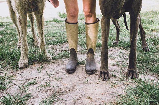 Boots with the fur. ⠀⠀⠀⠀⠀⠀⠀⠀⠀ #irishwolfhound #greatdane #hunterboots #imamodernfarmer #congareeandpenn #floridafarm