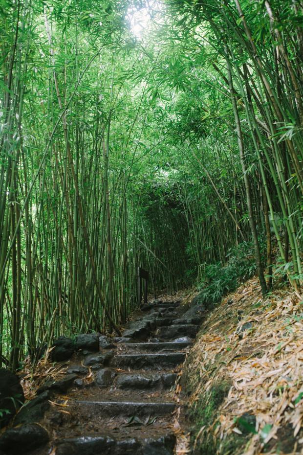 CCRK Shortcut Travels Road to Hana-38