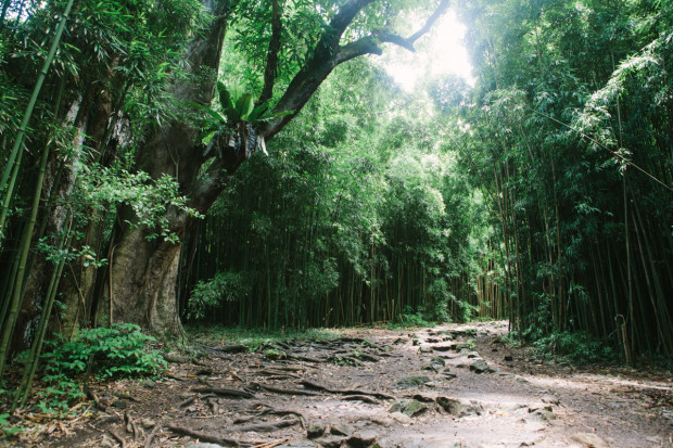 CCRK Shortcut Travels Road to Hana-47