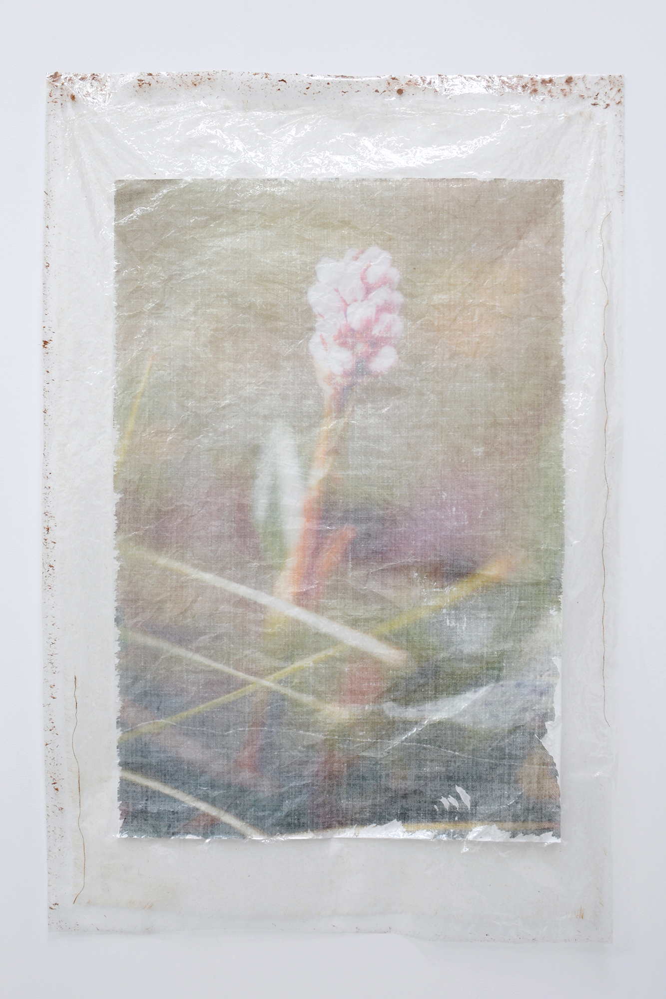 Valerie Snobeck, Dennis' Flower (parting) , 2013, peeled print and burlap on plastic, 149 x 97cm