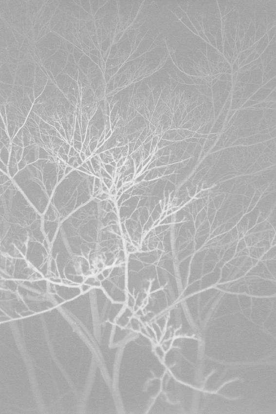 Ola Rindal,  Night (Tree III) , inkjet print, 124,6 x 82,5 cm, 1/5