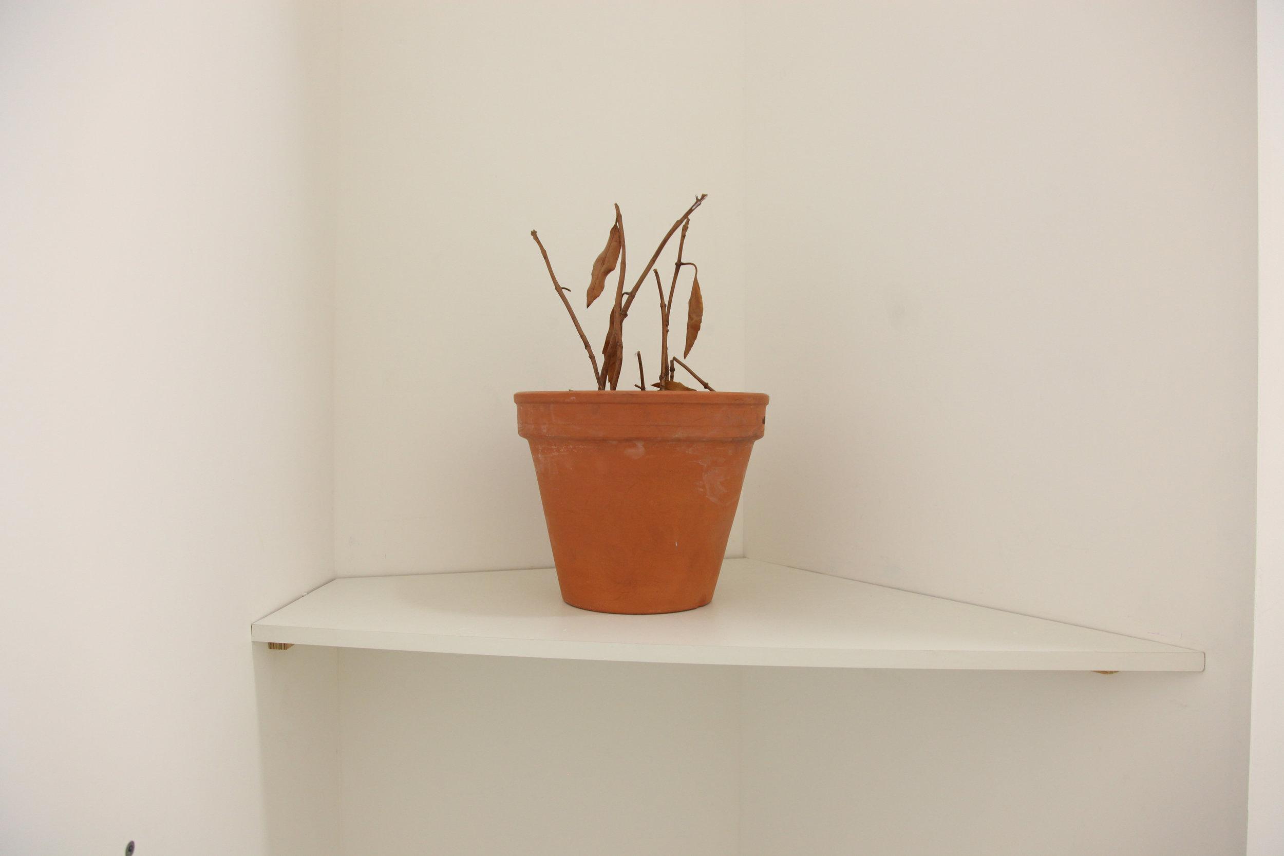 26.01.2018 until 05.05.2018 , Catherine Bastide projects, Marseille, exhibition view, 2018 -Julien Berthier, Plante en plastique morte 2  , detail view