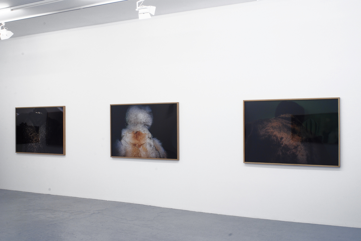 Olga Chernysheva, I nvolutions , Catherine Bastide gallery, Brussels 2007, exhibition view
