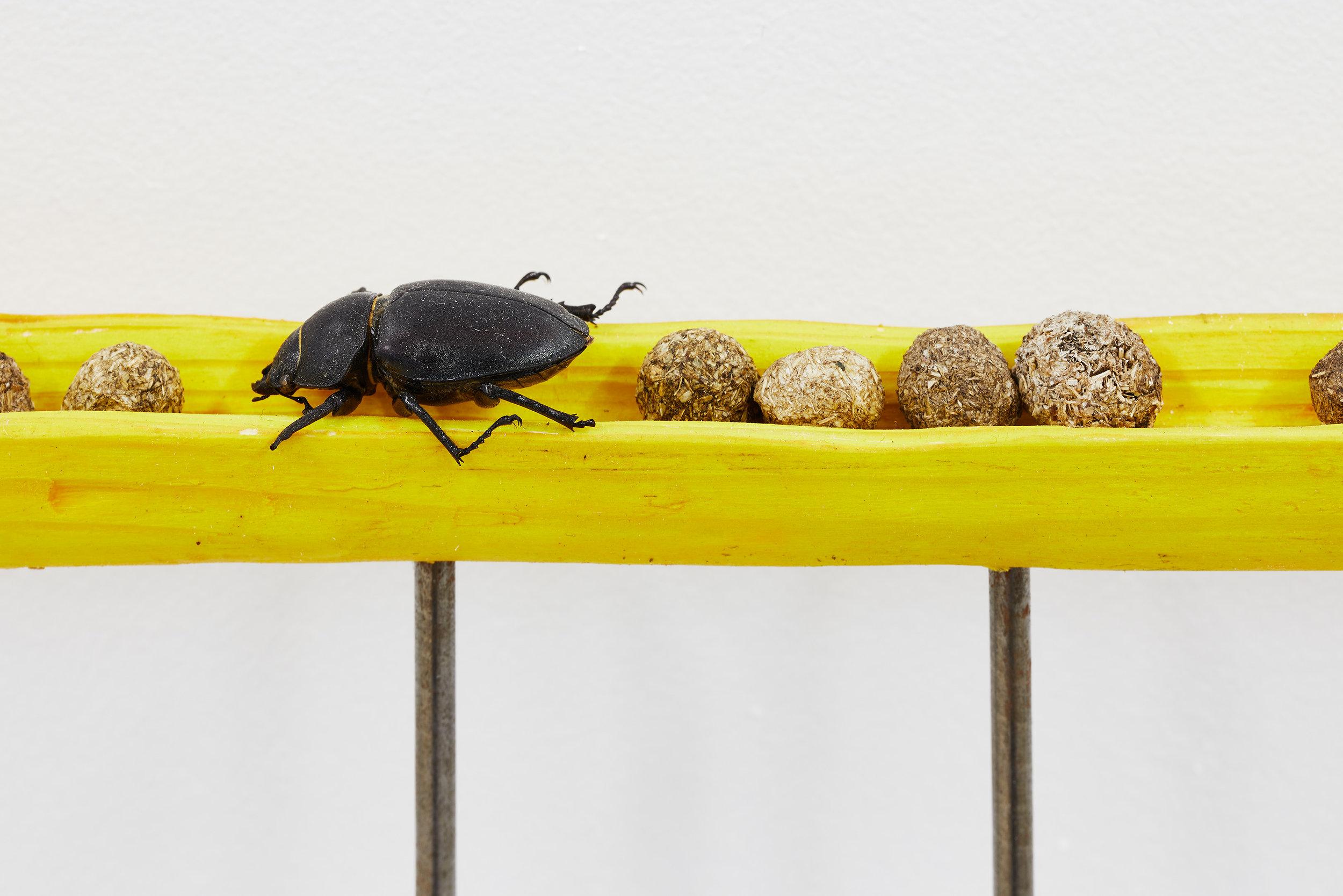 Le bousier sacré,  2019, detail. Bois, crottes de lapin, scarabée, acier