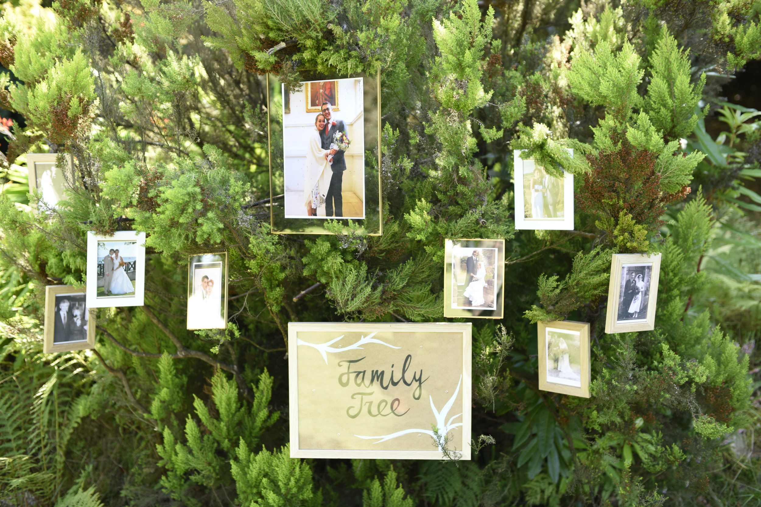 Family Tree. We gathered all the wedding photos of immediate family and hung them around the tree. We love producing thoughtful touches like these.