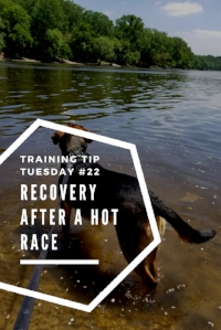Training Tips Tuesday #22 Recovery after a hot race Pinterest.jpg