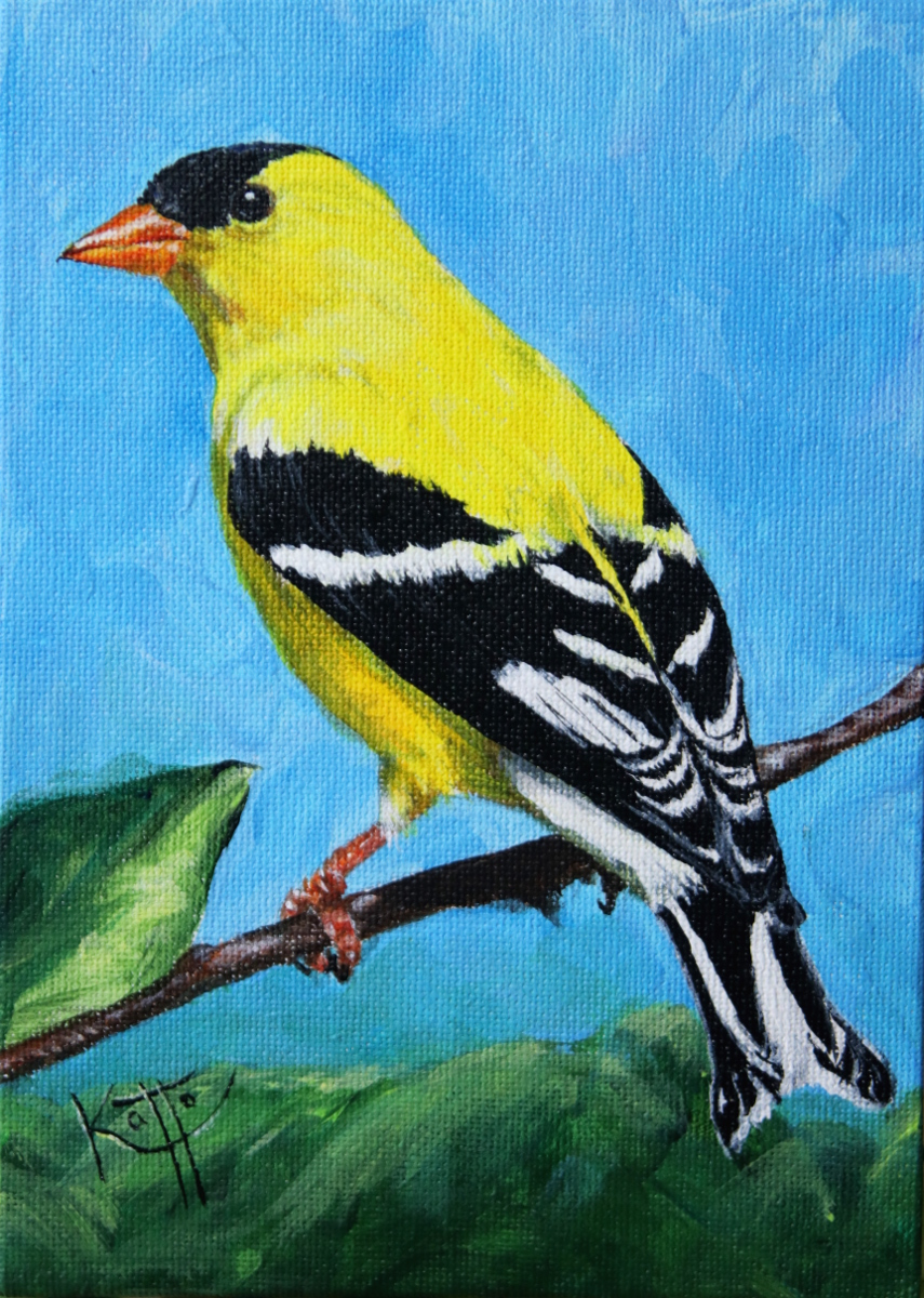 """Goldfinch"""