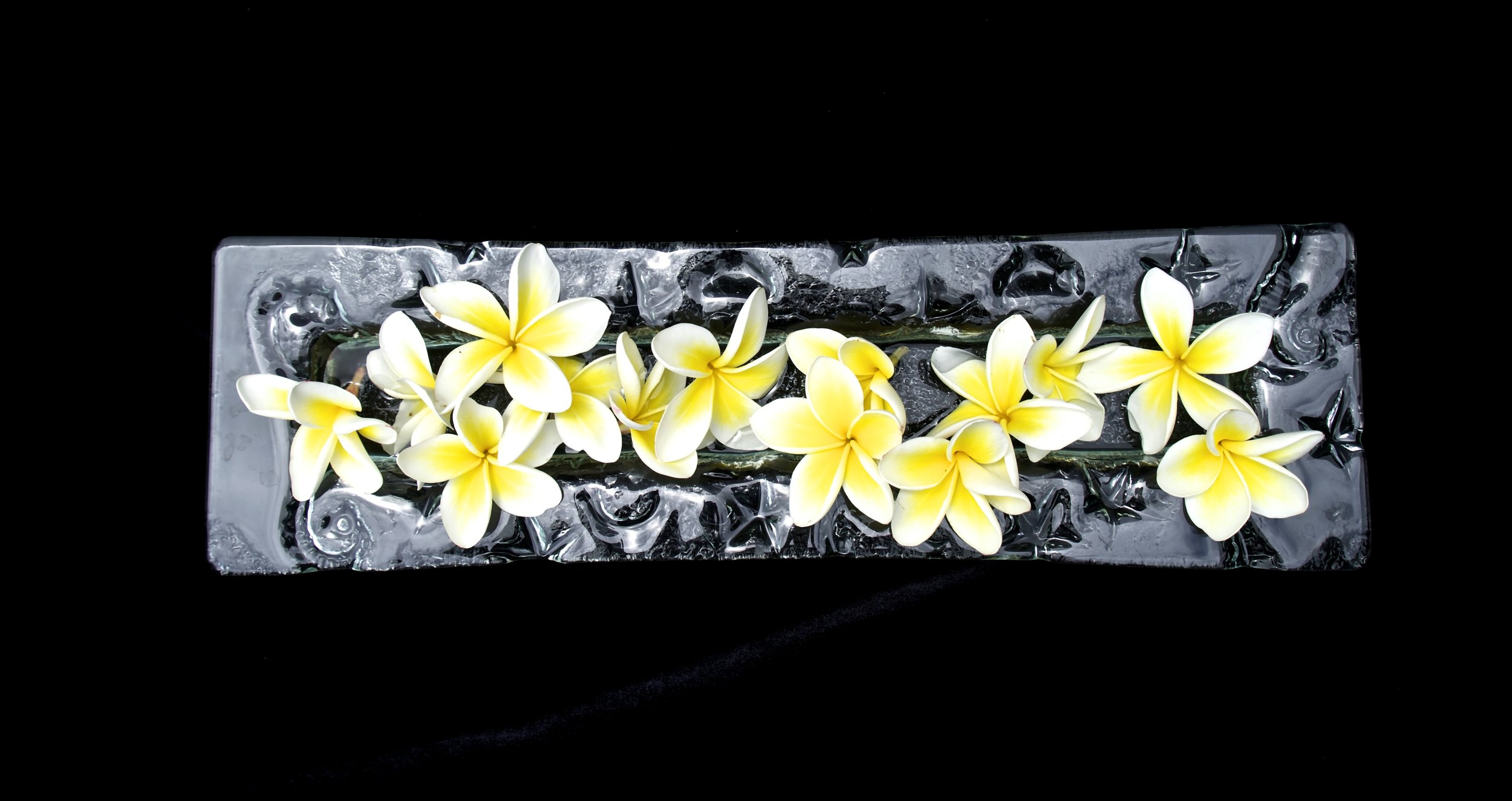 Long Frangipani on Black.jpg