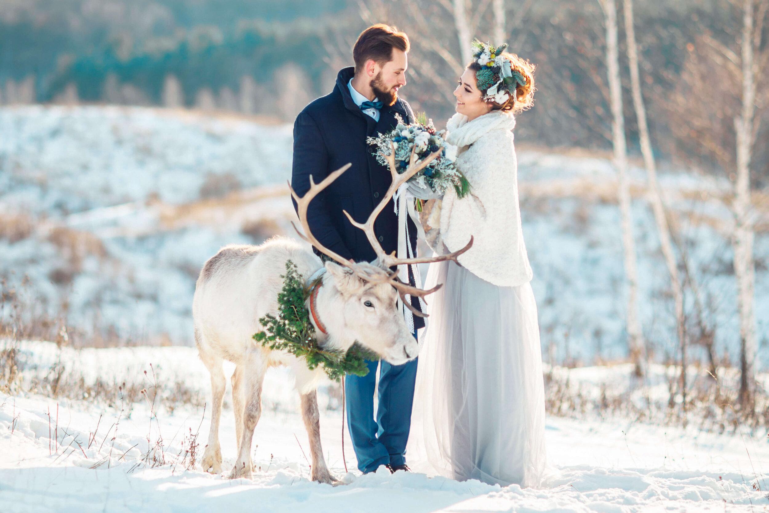 Bride and groom smiling in snowy field with elk.jpg