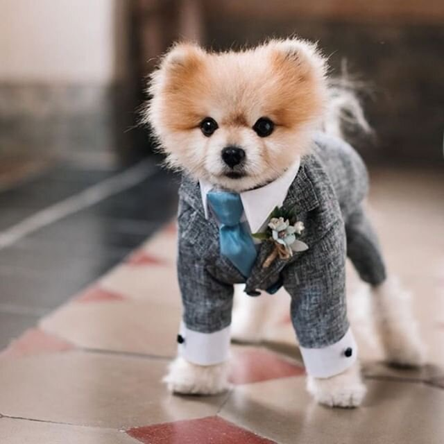 Just a reminder that ALL guests should come to the wedding in their best outfits. 😉 | 📸: @andrew_bayda 📋: @happy.moments.collector
