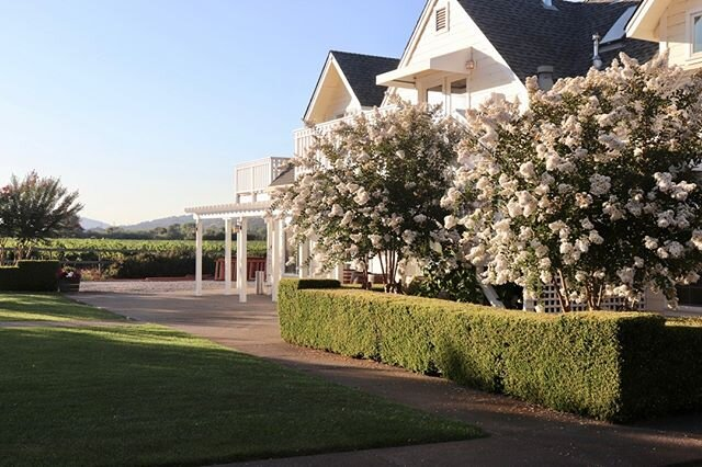 At the Geyserville Inn, wisteria hangs languidly on the pergola, the lawns are lush and inviting, and the landscaping is vibrant! Accommodates up to 200 guests, search Geyserville Inn on Wedding Spot or visit http://bit.ly/3aM5kQa for more info!⠀⠀⠀⠀⠀⠀⠀⠀⠀ ⠀⠀⠀⠀⠀⠀⠀⠀⠀ Location: Geyserville, CA ⠀⠀⠀⠀⠀⠀⠀⠀⠀ Instagram: @geyservilleinn