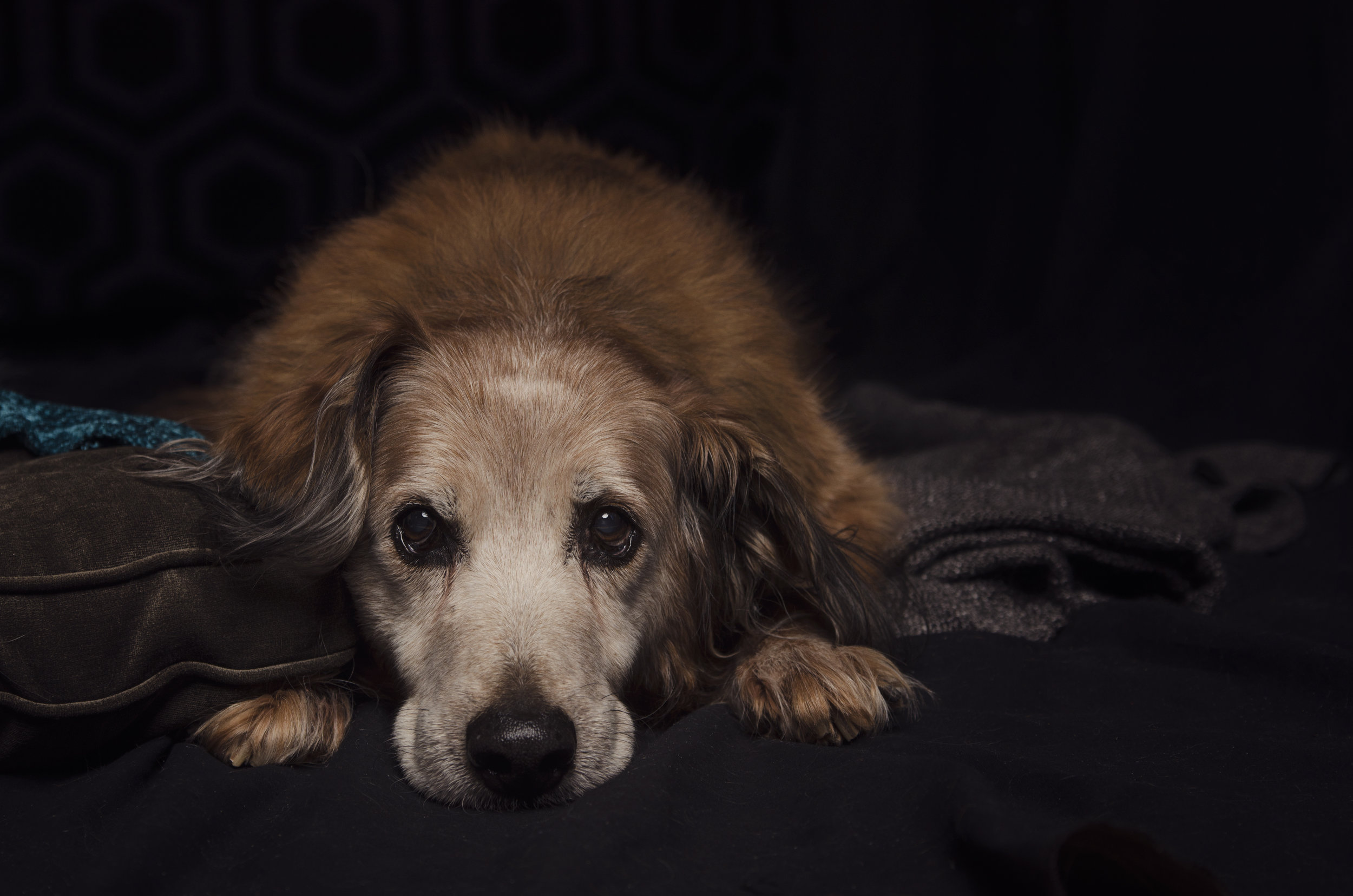 Flinstone-Decatur, il dog photographer