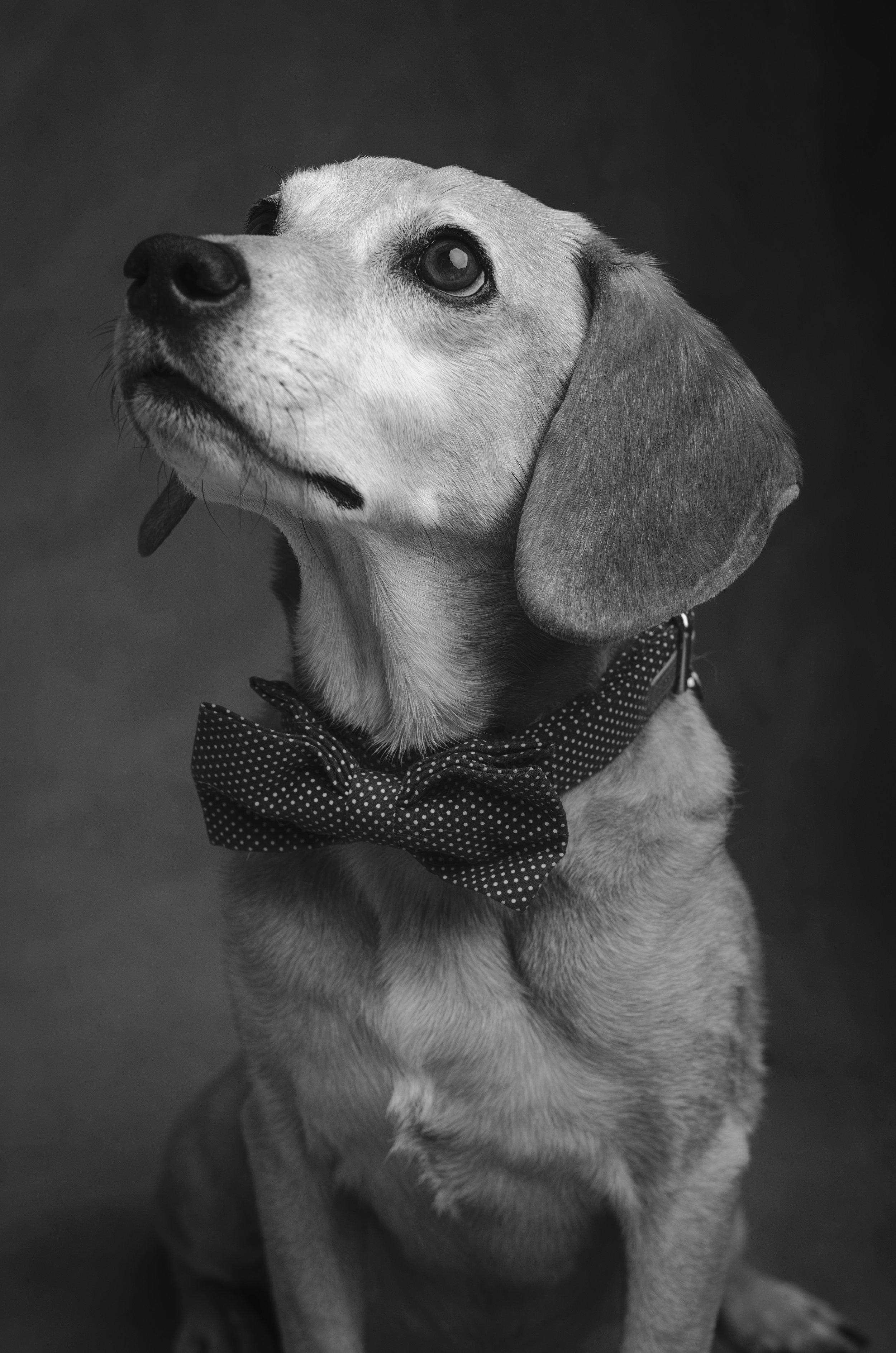 Laura's dog, Charlie