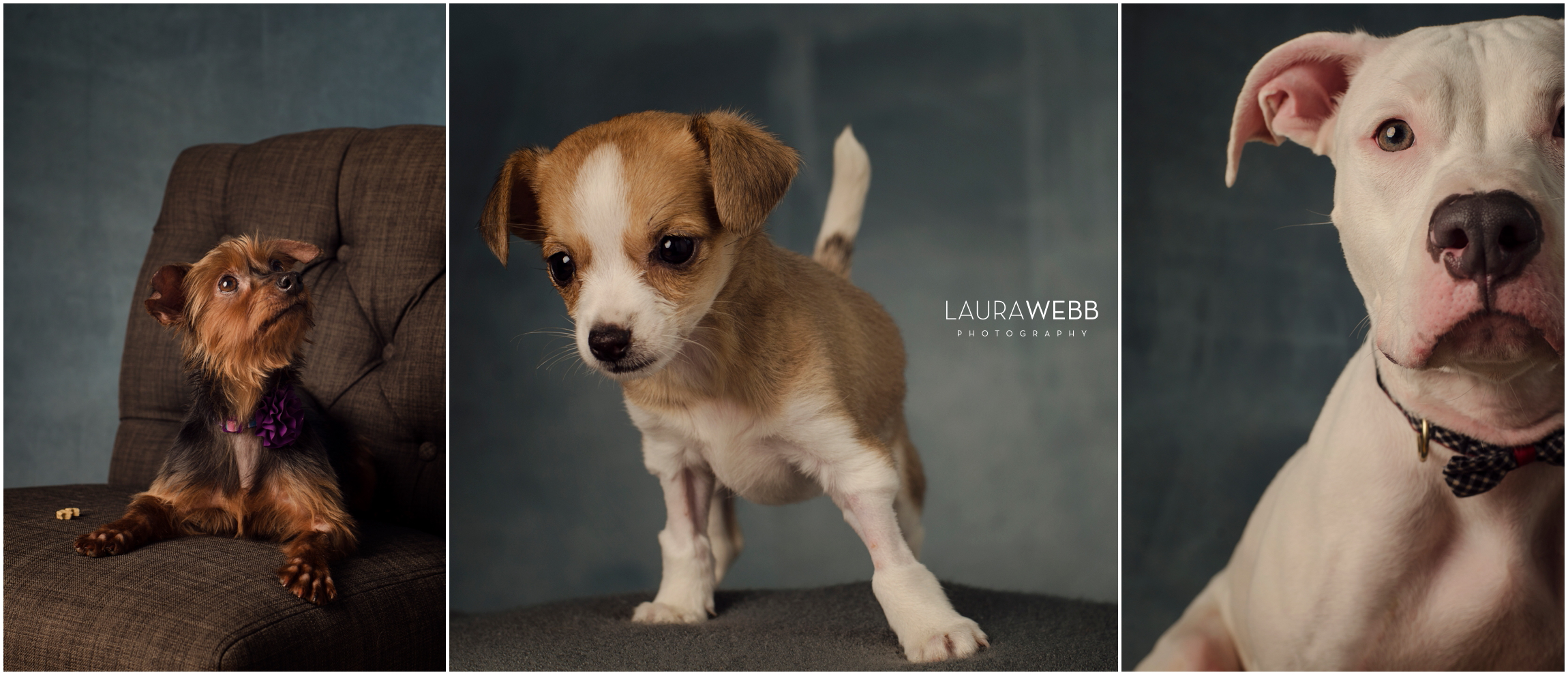 Dogs of Hudson's Halfway Home-Decatur IL Dog Photographer