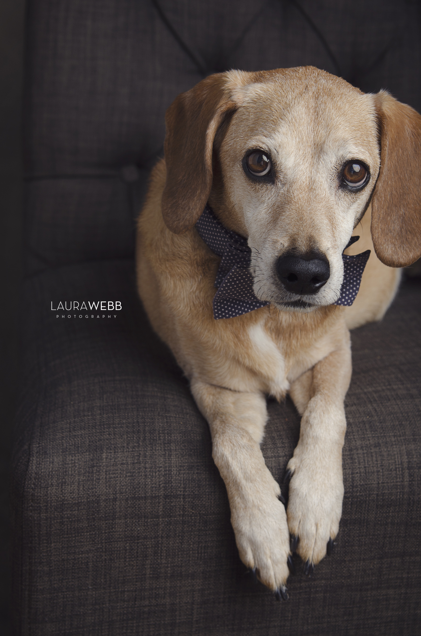 Charlie-Dog Portrait Photography.png