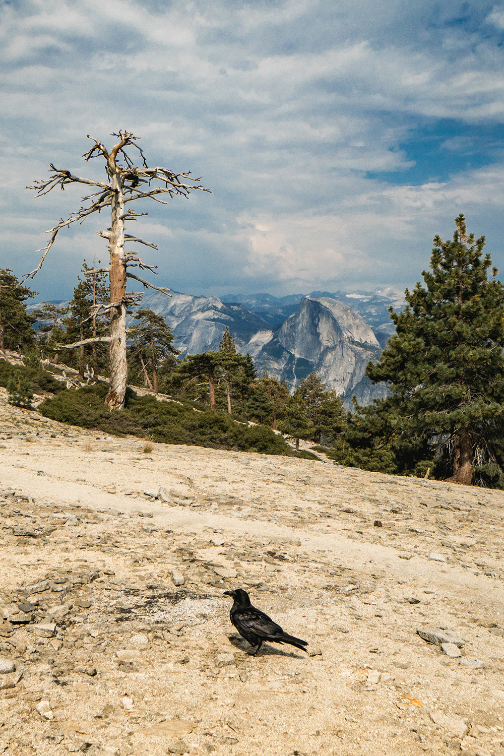 Something tells me this cheeky fella comes here often... for the view of Half Dome, of course!