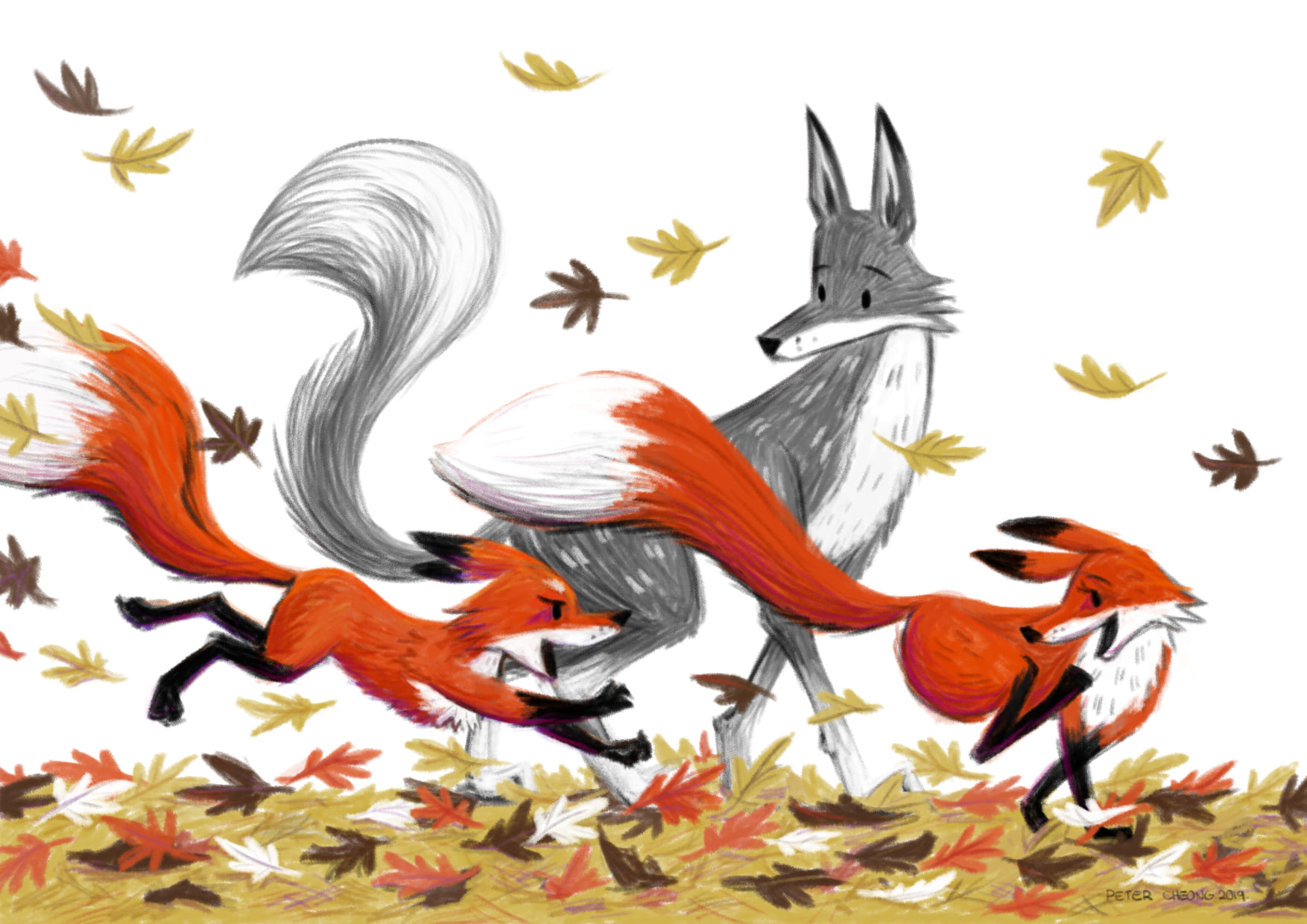 Foxes in Fall.
