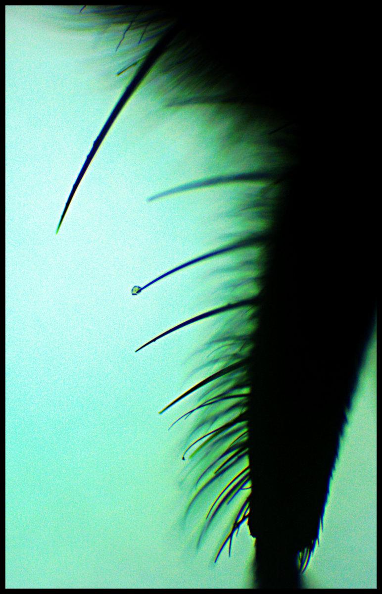 House Fly.jpg