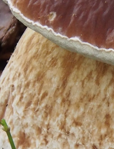 Honeycomb Reticulation