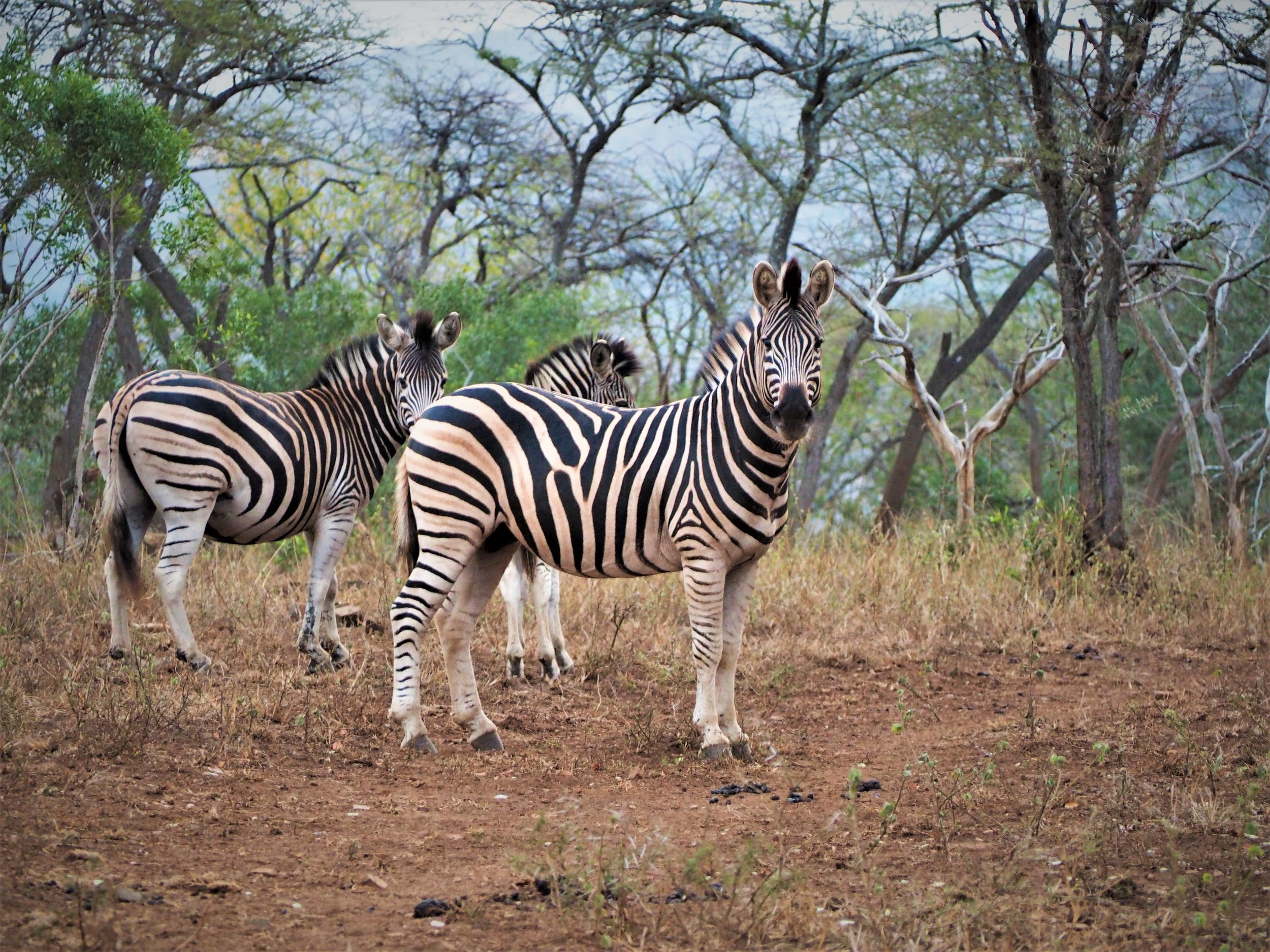 Zululand Conservation & Community Experience