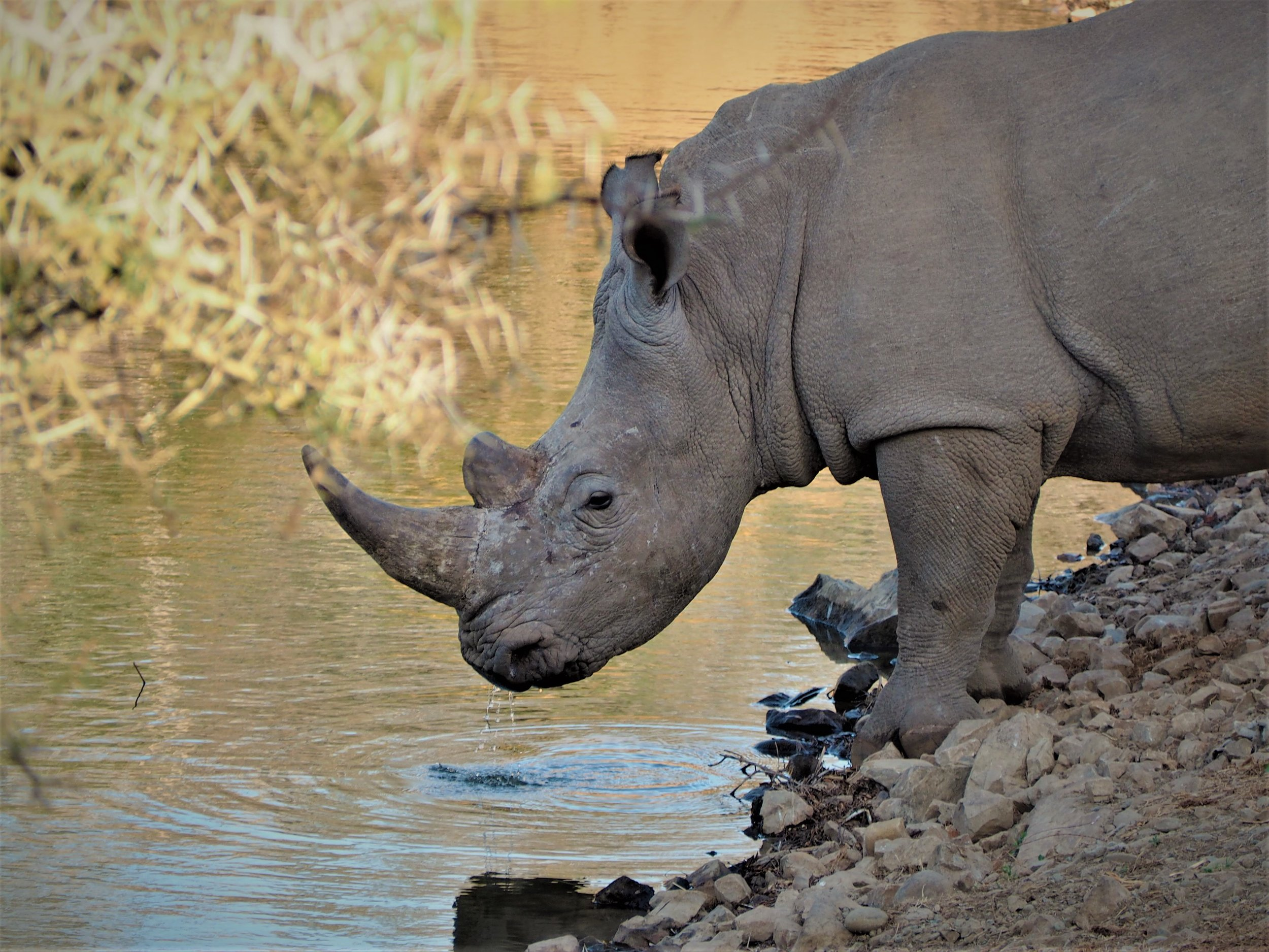 South Africa Southern Conservation & Community Experience