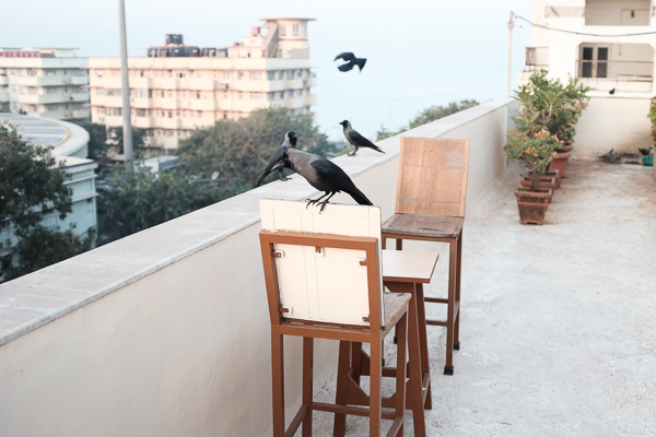 My hotel had a roof terrace. I arrived at seven in the morning, so I had a chai up there before I took off to explore the city. And crows actually run the country. They are everywhere.