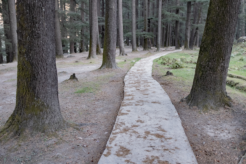 This protected forest - actually a tiny national park - separates (or connects) Old Manali from New Manali. You have to pay 20 Rp to walk through, but nobody cares if you don´t.