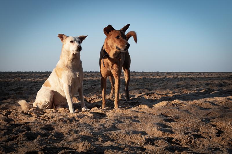 The beach-dogs were friendly.