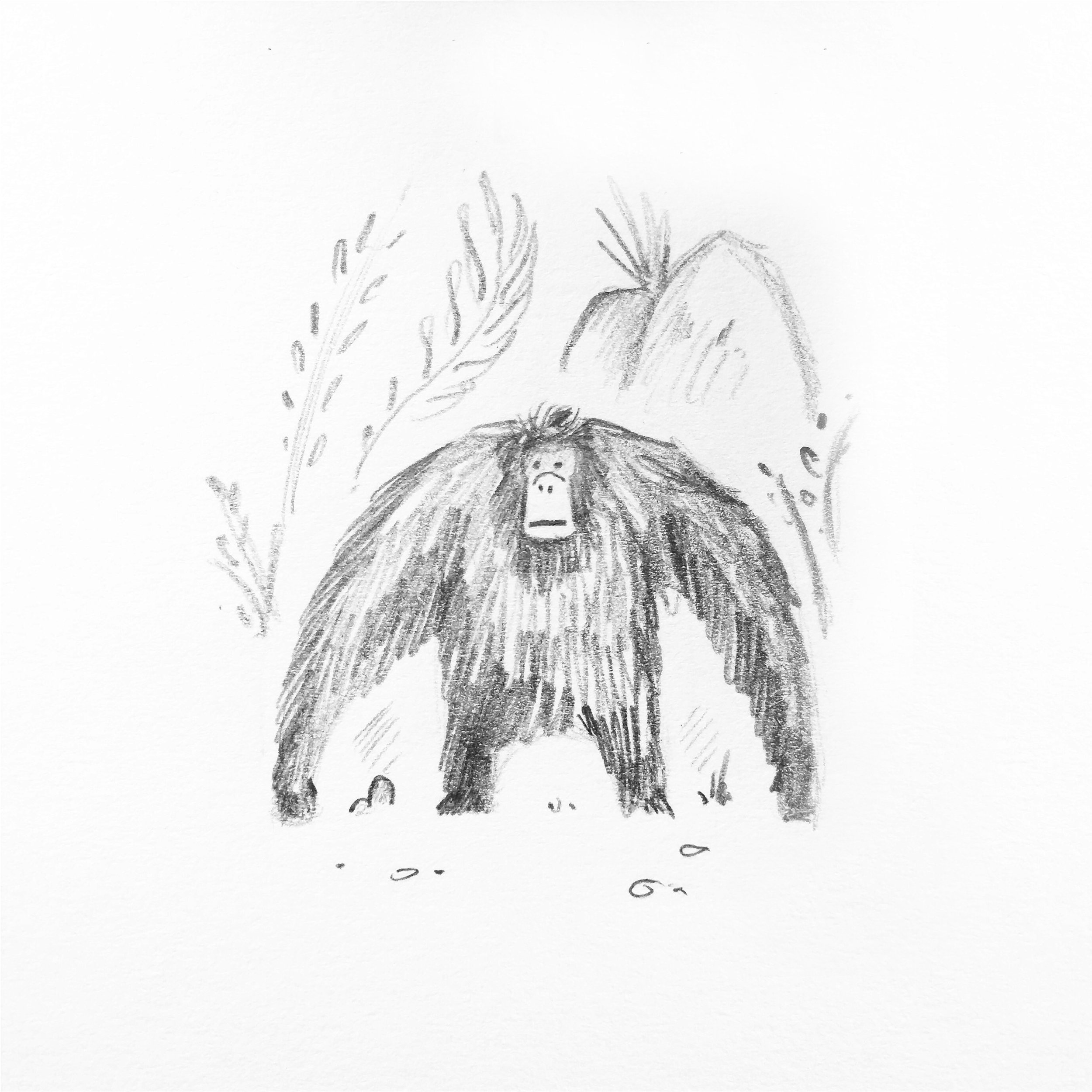 'Orangutan' © Jonty Howley Illustration