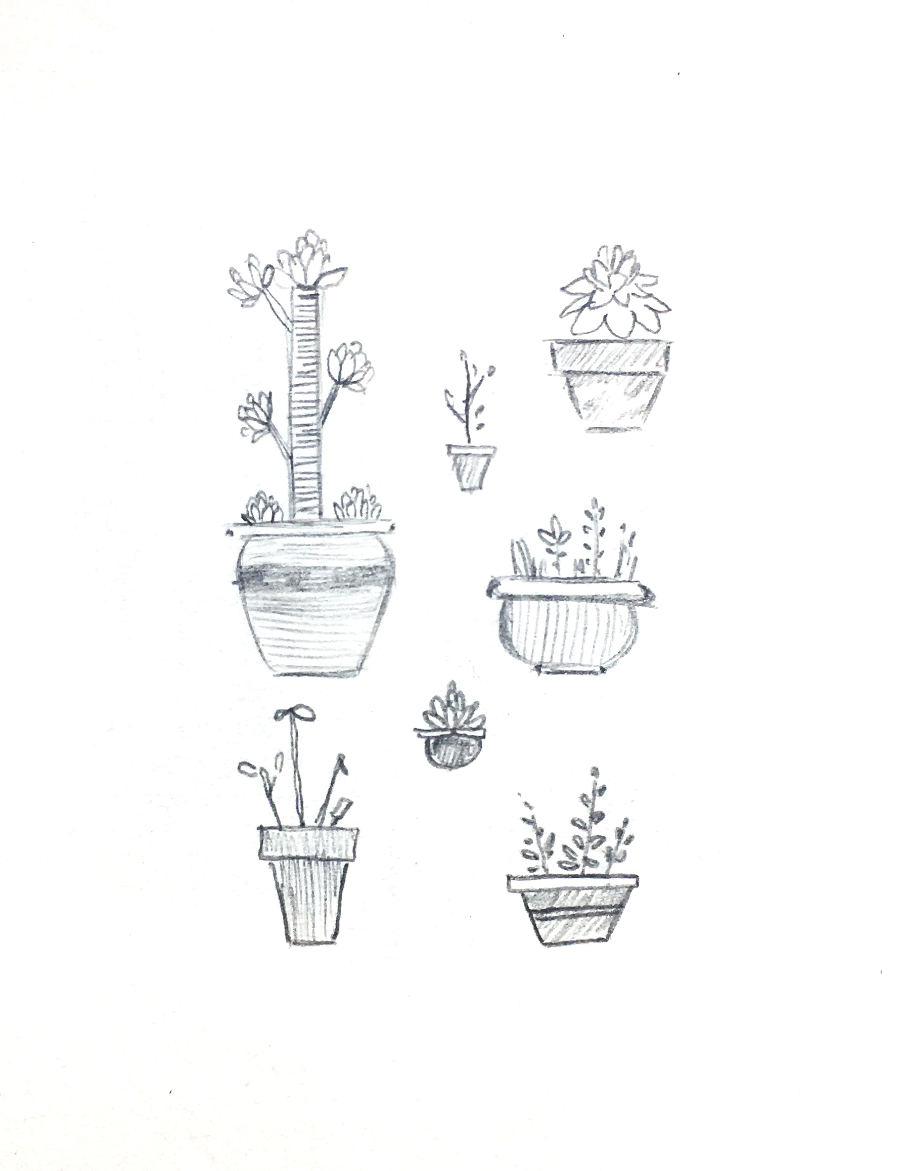 'Plants' © Jonty Howley Illustration