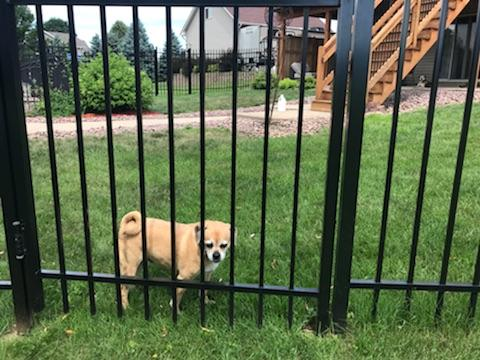 Why have a Fence? Help Protect your Pets too