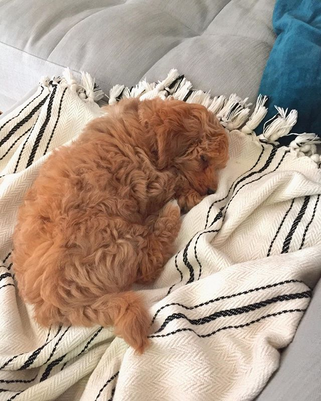 It's nap time people! All the babies and puppies are expected on the soft blankets please💤📢 #toffeethecotonoodle #purlondon #Turkishtowel #cottonblanket •⁣ ⁣ •⁣ ⁣ •⁣ ⁣ •⁣ ⁣ •⁣ ⁣ •⁣ ⁣ •⁣ #interiordesign #decoration #bathroom #livingroom #bedroom #peshtemal #pestemal #naturalfibres #nontoxichome #zerowaste #naturefriendly #organiccotton #beachtowel #travel #hammam #turkishbath #veganhome #minimalist #handloomed #handwoven #londonmarkets #smallbatch #sustainablefashion #slowfashion #ecofriendly #dogsofinstagram