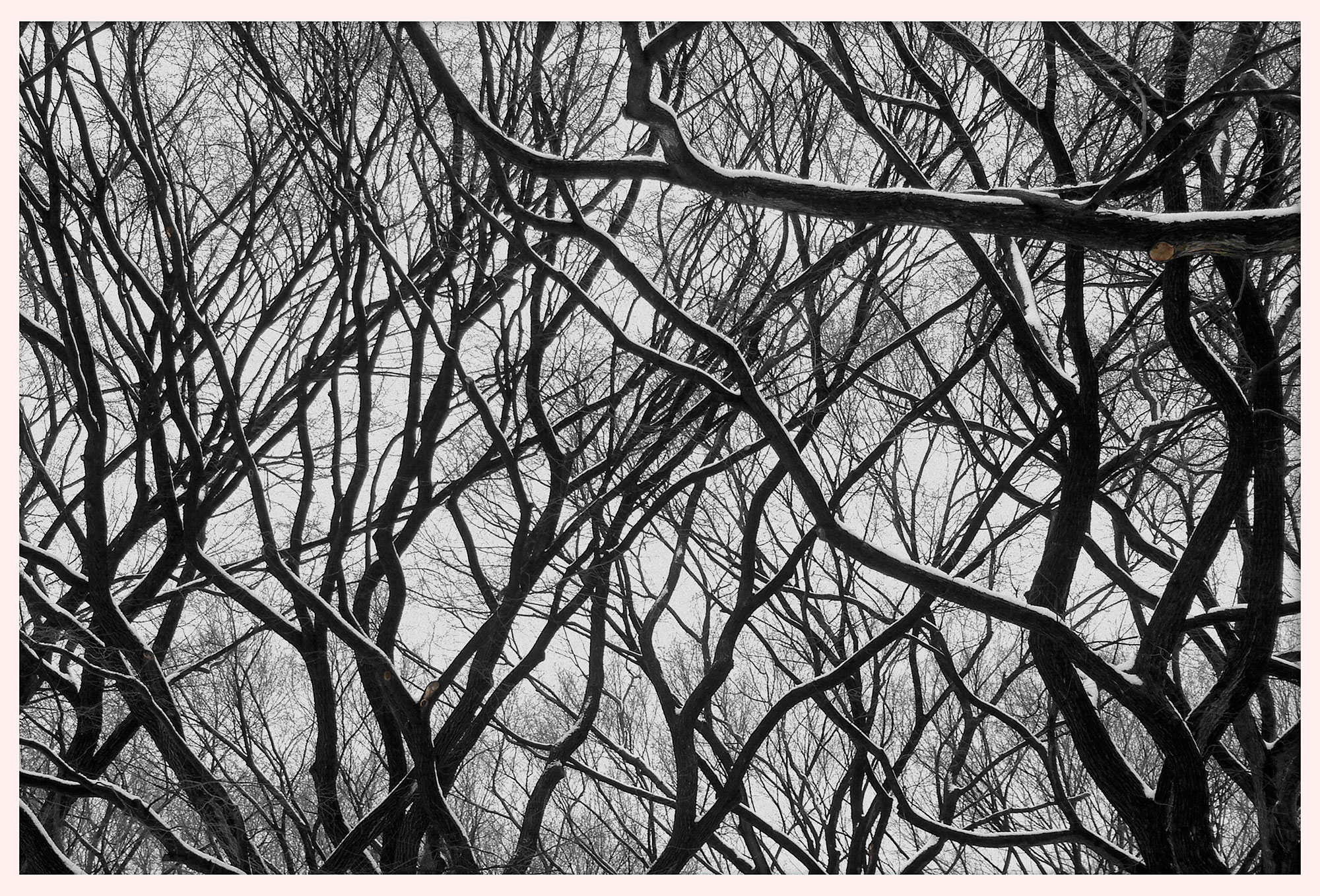 Snowy trees in New York City's Central Park. © 2005.