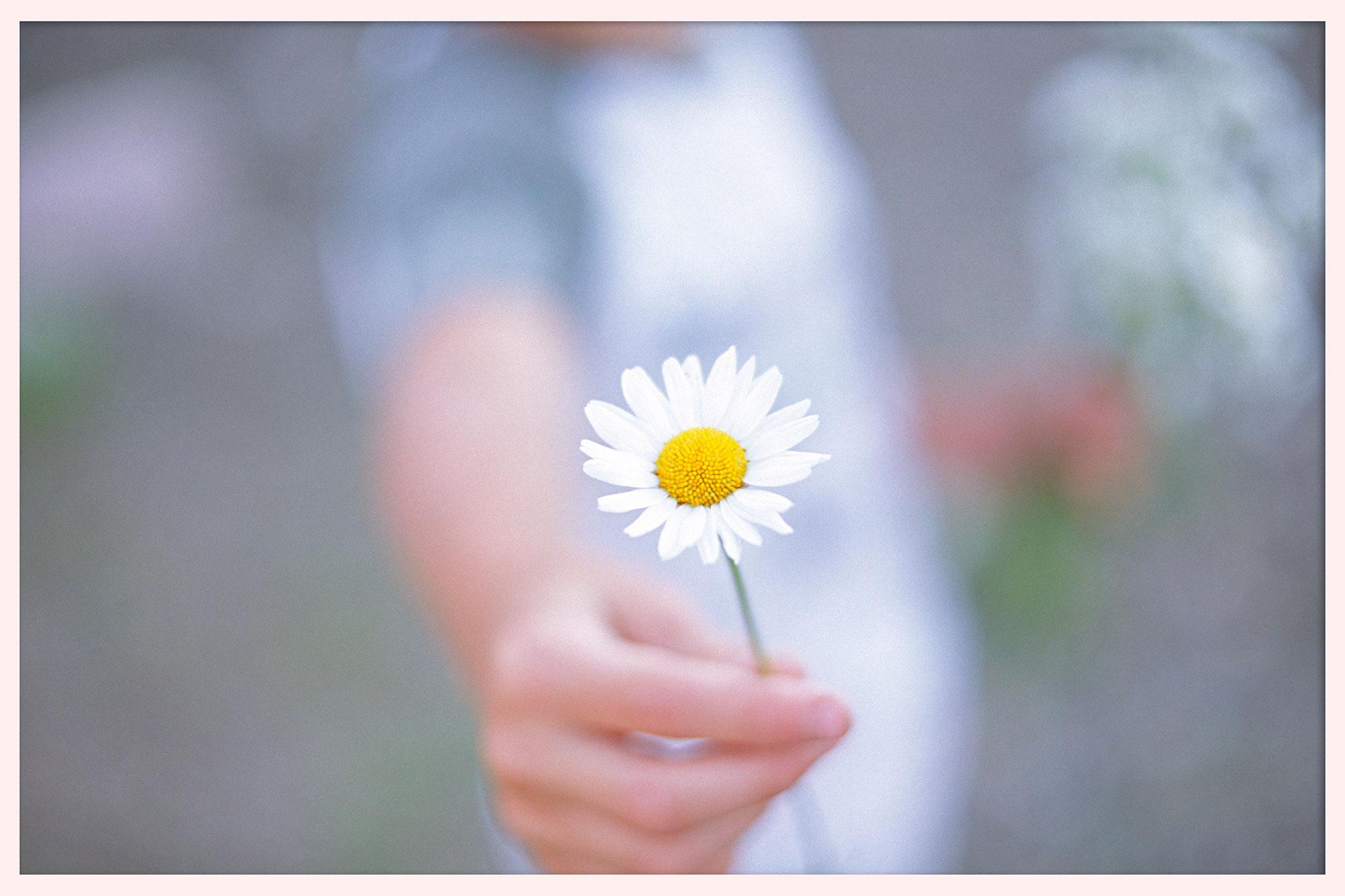 My nephew holding a fresh picked daisy. © 2005.