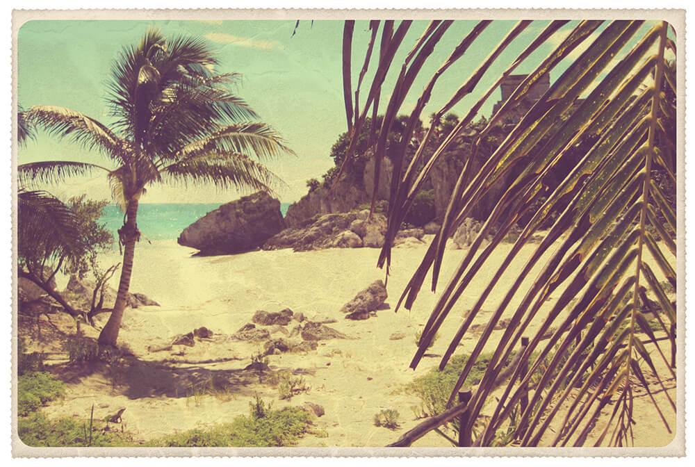 Vintage Palm Tree Postcard by John W. DeFeo
