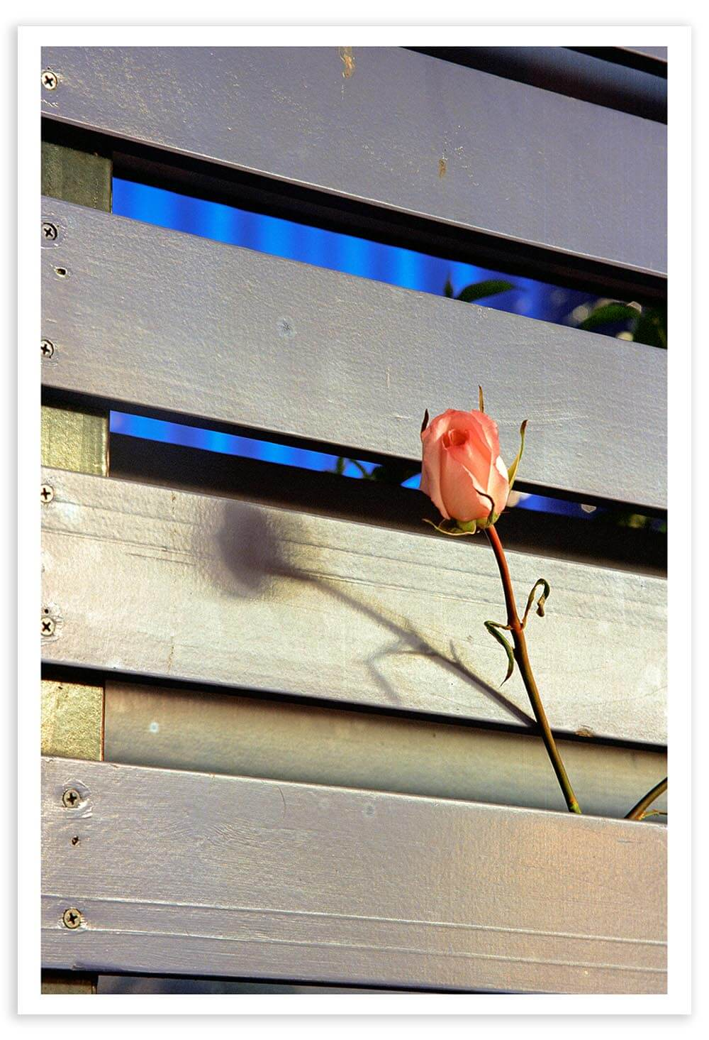 I remember feeling disgusted when I visited Ground Zero on Sept. 11, 2004. Throngs of tourists were taking smiling-selfies in front of the Tribute in Lights. I escaped the crowds and found this solitary rose: fitting for a young grave.