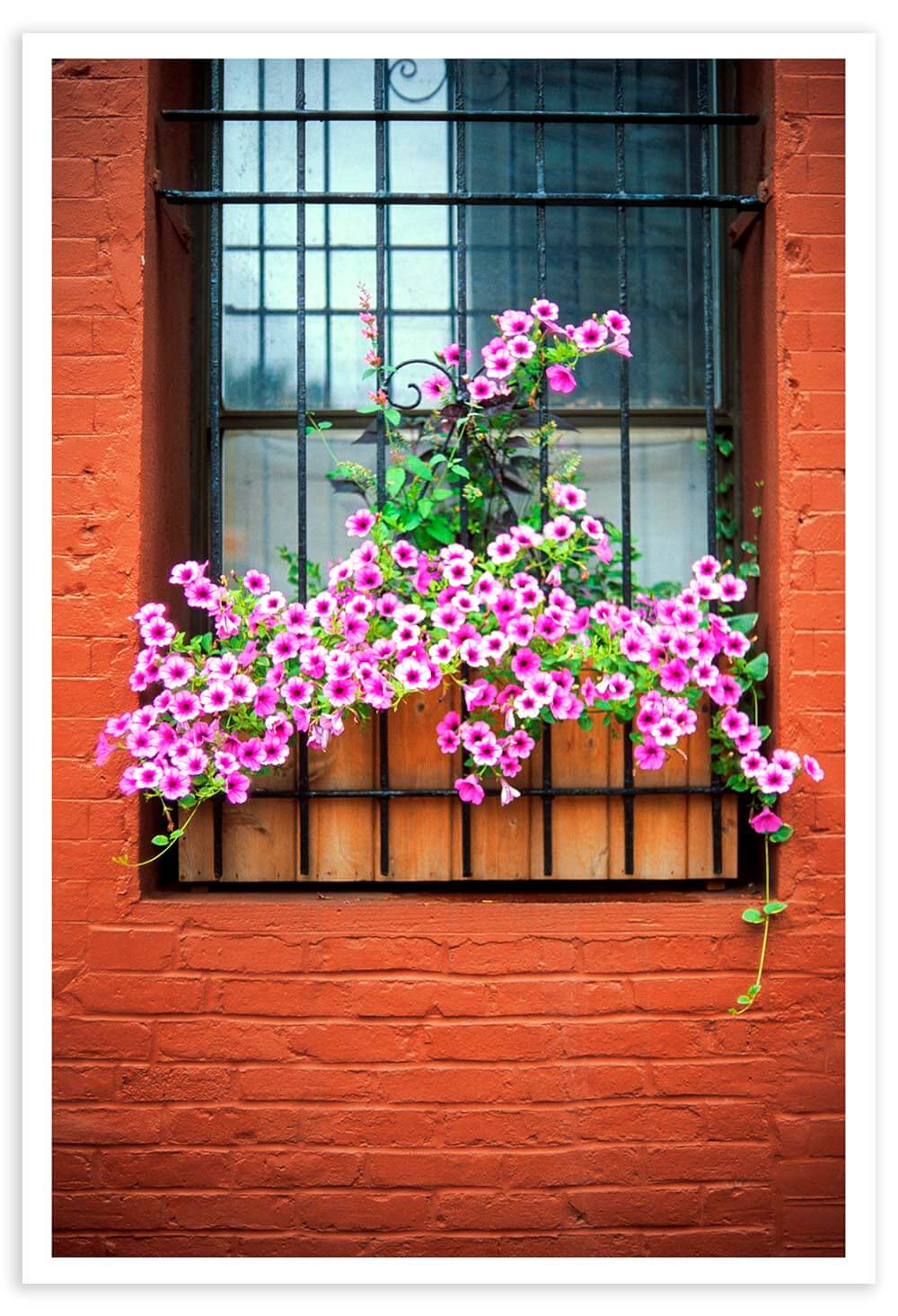 In what other city would you see flowers on the sill of a boarded-up window?