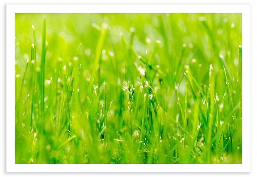 Overexposed 1:1 macro photograph of grass taken on an overcast day.  Exif Data: 1/125 sec ; f/7.1 ; ISO 320