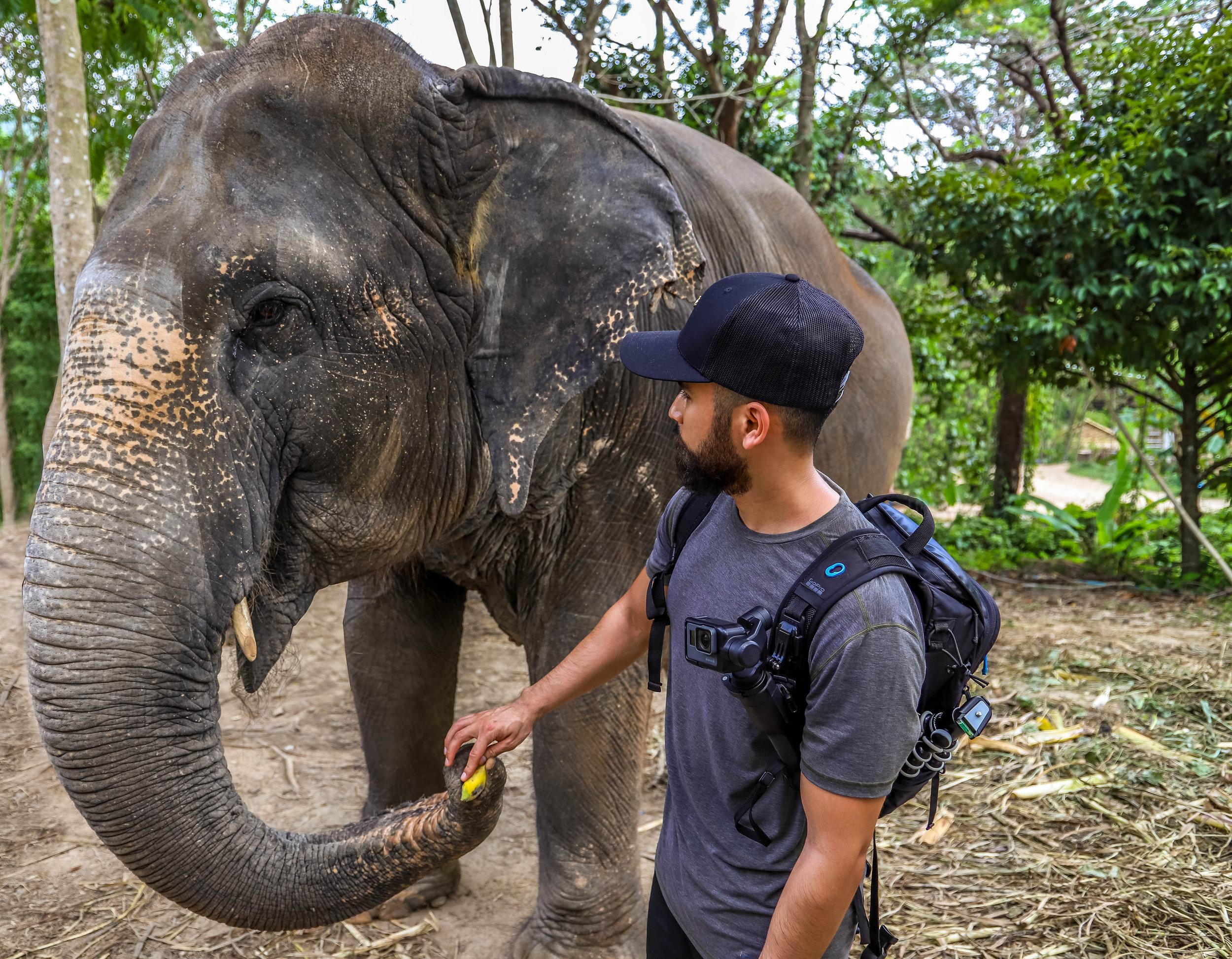 phuket-elephant-sanctuary