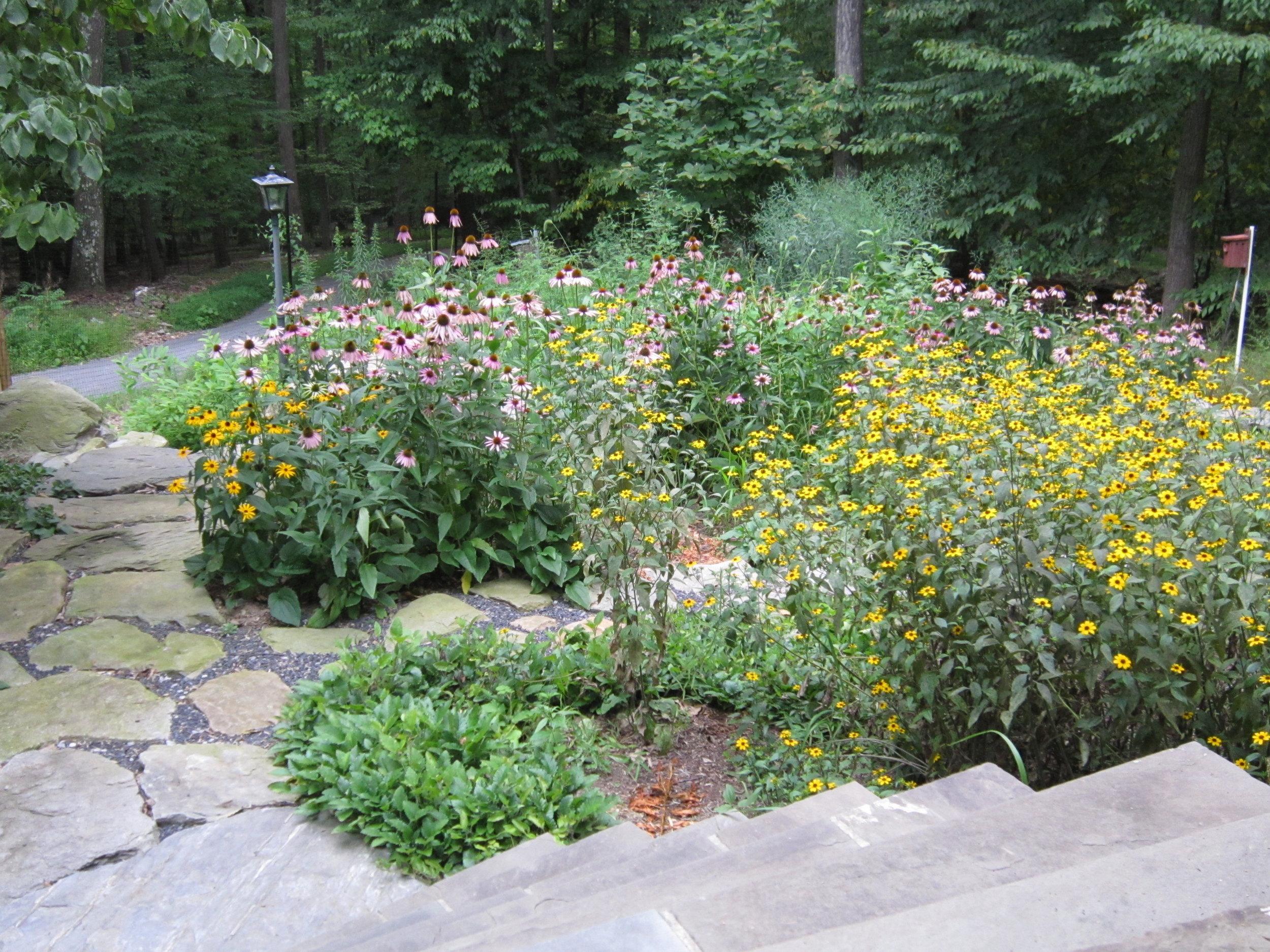 Ecourses Annapolis Native Landscape Design