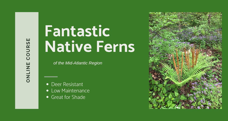 Fantastic Ferns Course Banner_-2.png